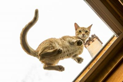 VacationsFRBO.com vacation rentals Property ID 80768